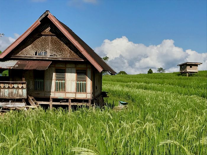 Old house Simple Wonderful Nature Simple Wonderful Indonesia Enviroment Wood - Material Woodshouse Built Structure Plant Building Exterior Sky Building Cloud - Sky Grass Field Land Landscape Green Color Rural Scene House Day Nature No People Agriculture Residential District Growth