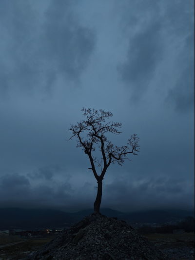 Bare tree on landscape against sky at dusk