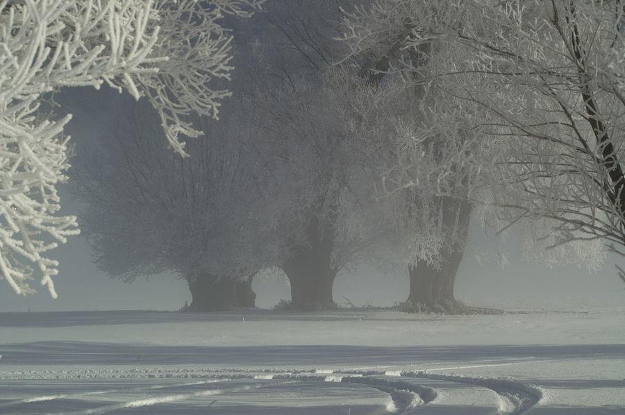 Schweiz Switzerland Wallis Leuk Winter Wintertime Winter Wonderland Winter Trees Winter Landscape Baum Bäume Baumgruppe Spuren Im Schnee Eis Schnee Snow Trees