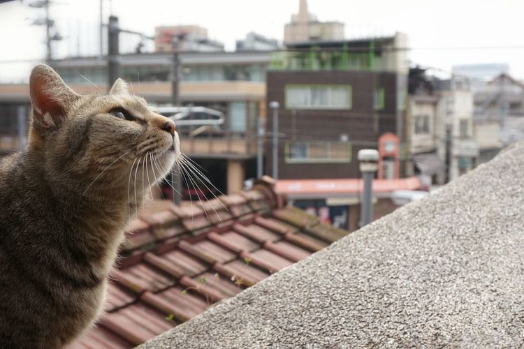 Stray Cat Streetphotography Sloping Road Cat Photography Cats Of EyeEm Onomichi ♪…生まれてきた その訳は…生きて行く その意味は 少しだけ…♪64 映画見に行こ、、😌😌😌