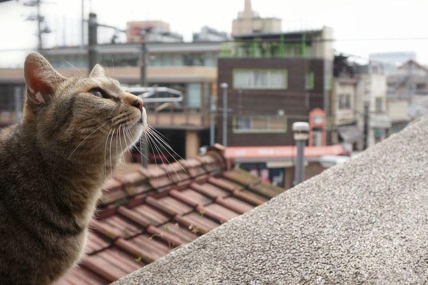 Stray Cat Streetphotography Sloping Road Cat Photography Cats Of EyeEm Onomichi ♪…生まれてきた その訳は…生きて行く その意味は 少しだけ…♪64 映画見に行こ、、😌😌😌