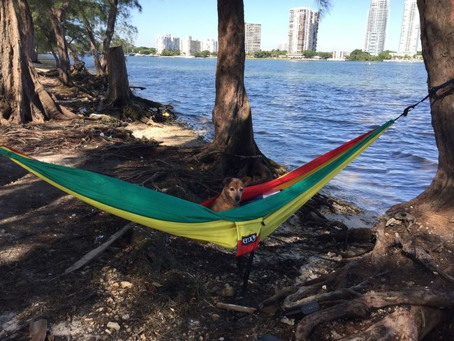 Relaxing Sea Tree Nature Outdoors Beauty In Nature Hammock Doggy Love