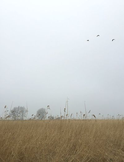 dutch spring in amsterdam Plant Sky Grass Tranquility Field Nature Beauty In Nature Environment Land Fog Landscape Vertebrate Bird Scenics - Nature Non-urban Scene Day Growth Tranquil Scene Animal Themes No People