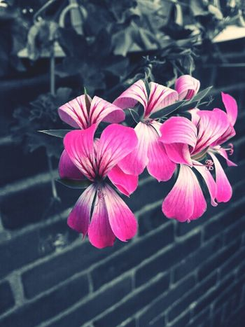 Gardenflowers EyeEm Best Edits Eyeem Best Shots Flowers