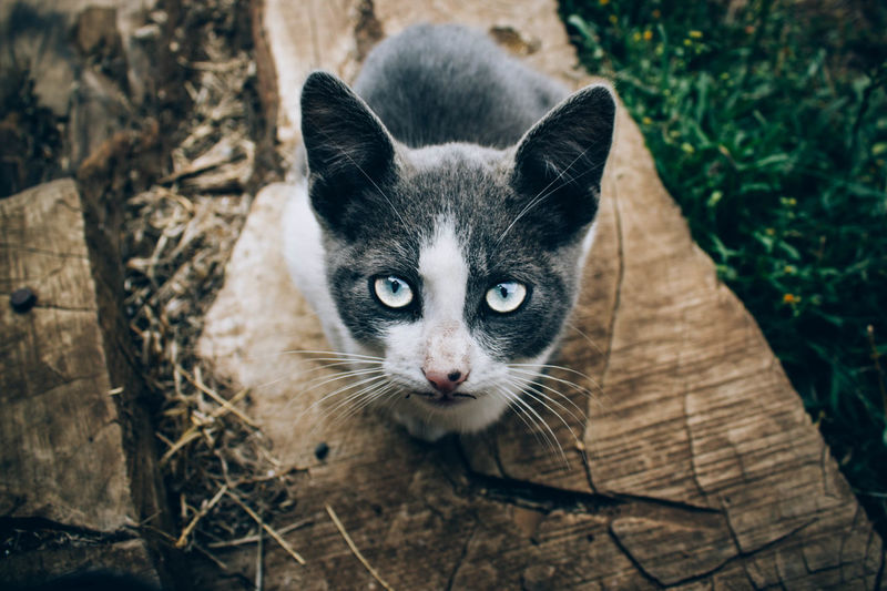 Alertness Animal Eye Animal Head  Animal Themes Cat Cats Curiosity Domestic Animals Domestic Cat EyeEm Best Shots Feline Film K Looking At Camera Mammal Nature One Animal Perspective Pets Portrait Relaxation Relaxing Whisker Zoology Showcase March