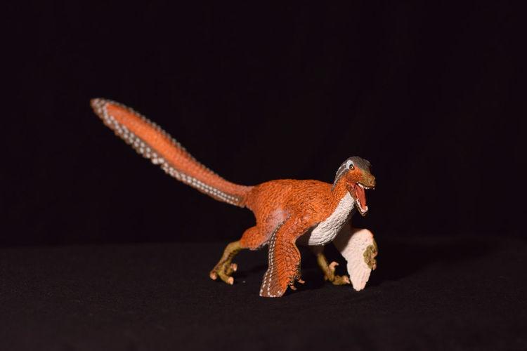 Child's Toy Feathered Raptor Dinosaur Ancient Fun Jurrasic JurrasicPark Lizard Raptor Reptile Velociraptor Animal Cretaceous Dinosaur, Plastic Play Prehistoric Toy