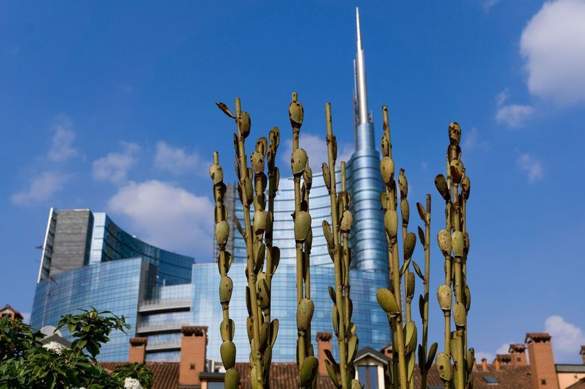 When Nature meets Architecture. Distant view of porta Nuova skyline. Minimal Design High Rise Architecture Architecture Photography Cityscape Travel Lombardy Modern Architecture Italy Milan Porta Nuova Sky Cloud - Sky Building No People City Outdoors Skyscraper Sunlight Plant Office Building Exterior Travel Destinations Blue Tall - High Growth Day