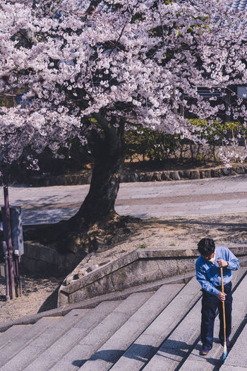 Rear view of woman standing by cherry tree