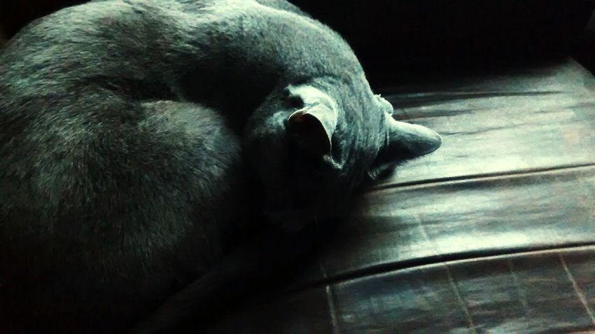 So sad Sadcat Cat Cute Cute Pets Sadpuppy Galactus_god
