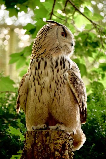 Who's the wise one ? Festhers Owl Animal Wildlife Animal Themes Animal Animals In The Wild One Animal Vertebrate Bird Bird Of Prey Branch Perching No People Looking