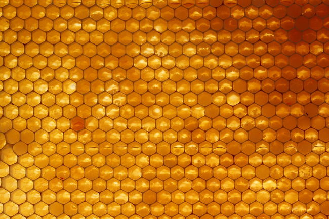 Bees Close-up Day Food Full Frame Gold Healthy Eating Honey No People Wachs Art Is Everywhere Paint The Town Yellow