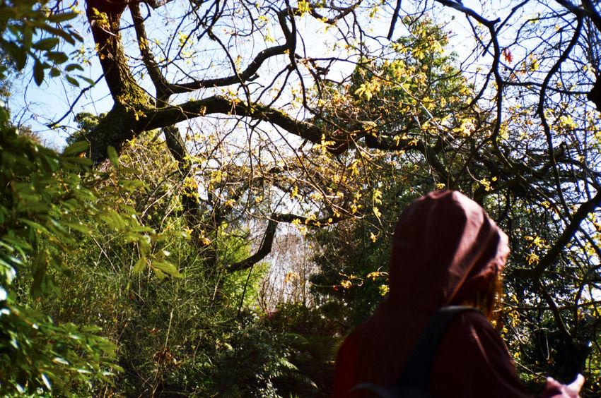 Analog Analogue Photography Color Flowers Tree Testing Konica C35 for Sítio do Cano Amarelo