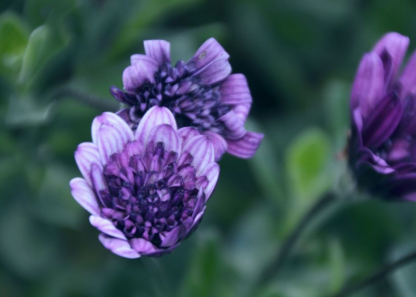 Violete flowers 😍💜🌸💜 Summer Nature Summertime Colorfull Nature Photography Just Taking Pictures I Love Nature! The Essence Of Purity And Beauty Getclosetonature Get Close Makrophotography Makro Photography Violet Flowers Flowers, Nature And Beauty