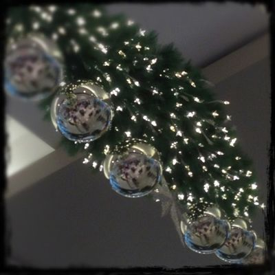#christmas #pretty #lights #igfame #igdaily #igers #instagramers #iphonesia #iphone #instalove #instagood #instamood Igers IGDaily IPhone Instagramers Lights Instagood Beautiful Instagramhub Happy Instadaily Love Instalove Cute Igfame Christmas Pretty Iphoneonly Photooftheday Iphonesia Picoftheday Instamood Bestoftheday