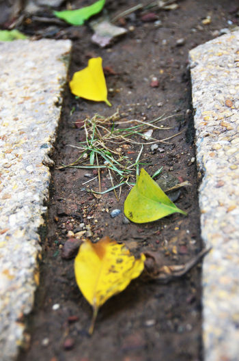 Leaf Leaves In The Ground Nature No People Outdoors