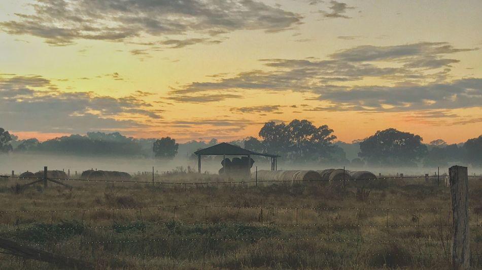 Foggy Sunrise IPhoneography Sunrise Foggy