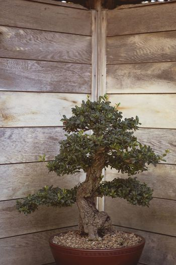 Growth Plant Nature Potted Plant Window No People Bonsai Tree Architecture Day Table Indoors  Wood - Material Built Structure Home Interior Beauty In Nature Close-up Flower Freshness Garden Beauty In Nature Tree Faded