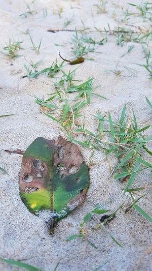 Leaf Holes Beach Sand Day No People High Angle View Outdoors Animals In The Wild Nature Plant