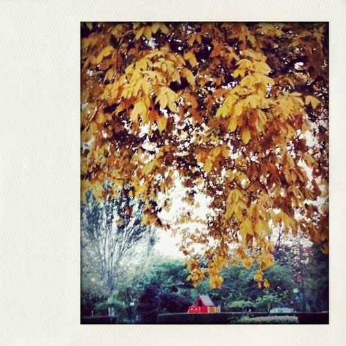 fall season leaves