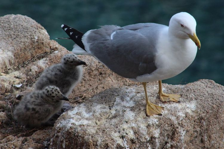 Close-up of birds perching on rock