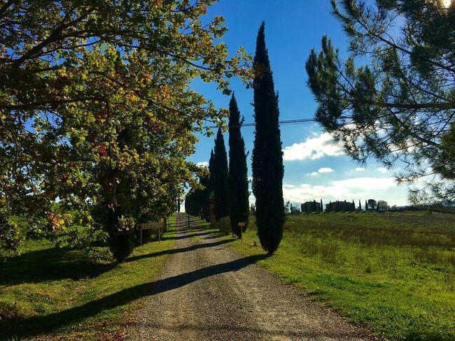 Tuscany Italy Landscape Holiday EyeEm Best Shots Autumn Colors