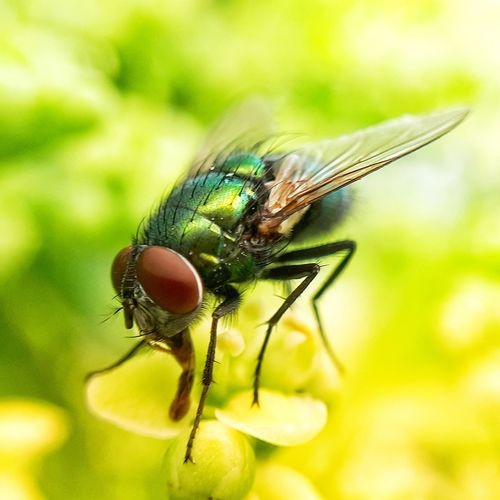 fly Perching Flower Insect Close-up Animal Themes Plant Fly
