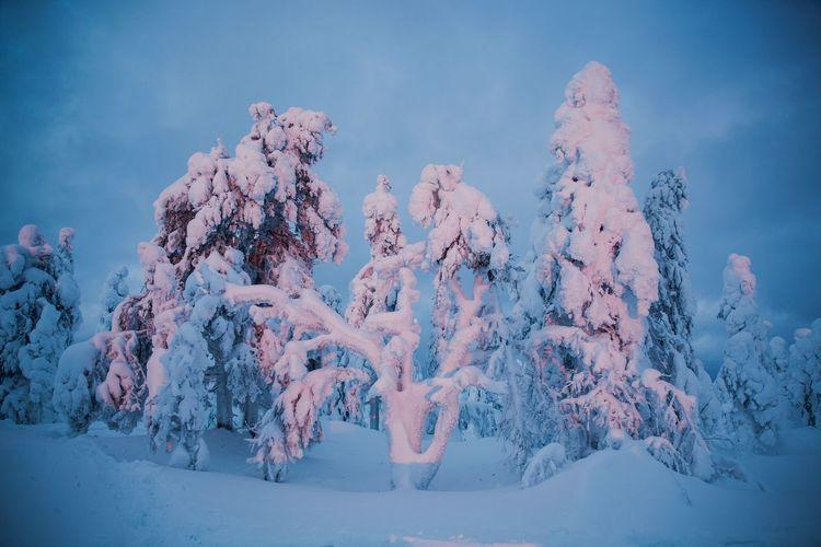 Finnish Nature Nature Cold Temperature Tree Kontainen Winter Finnland