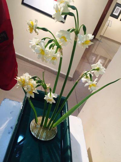 ıkebana ıkebana Sanguetsu ıkebana Sogetsu Japan