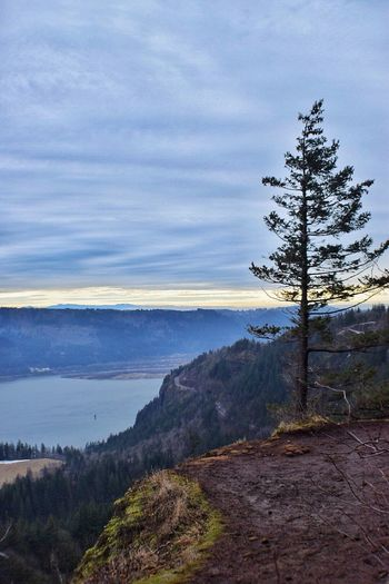Went on a nice somewhat icy hike the other day 😁 Sky Scenics Horizon Over Water Beauty In Nature Tree Nature Water Cloud - Sky Tranquility Tranquil Scene Outdoors No People Mountain Day Taking Photos Enjoying Life Cold Temperature Beauty In Nature Oregonexplored Lifestyles Oregonlife Oregon My Point Of View Columbia River Gorge Cape Horn