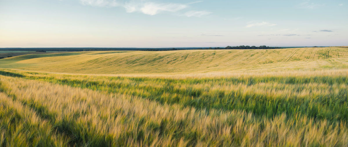 Ukraine Agriculture Barley Barleyfield Beauty In Nature Cloud - Sky Field Growth Horizon Land Landscape Nature No People Plant Sky Україна поле трансгенный ячмень