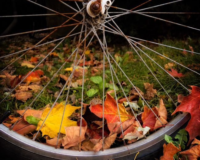 autumn leaves Autumn Leaf Fall Outdoors Day No People Nature Autumn Leaves Close-up Bicycle Rusty Bicycle Wheel Fall Colors Fall Leaves EyeEm Best Shots EyeEm Nature Lover EyeEmNewHere Whatisee Season