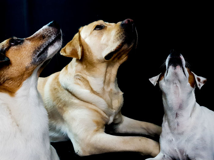 Close-up of two dogs at home
