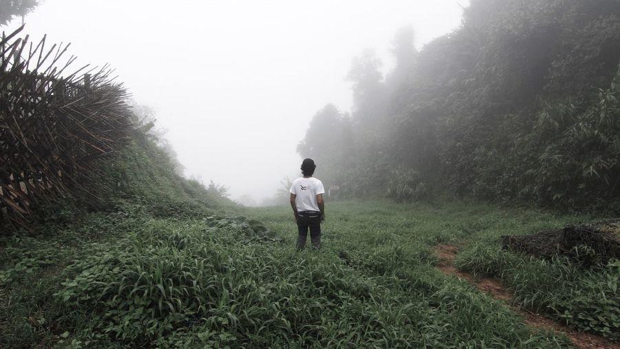 Rear view of man walking on landscape in foggy weather