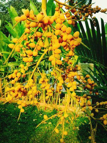 Tree Thailand