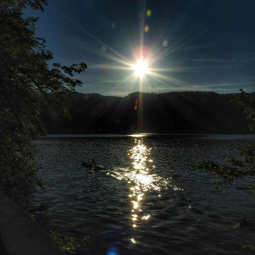 Bled Kayak Reflections ☀ Sunlight Iloveslovenia Beauty In Nature Slovenia ❤ Slovenia Natureperfection Path Bledlake