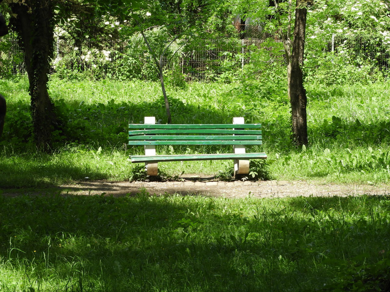 bench, tree, green color, park - man made space, grass, nature, absence, growth, day, tranquility, tranquil scene, beauty in nature, no people, seat, tree trunk, outdoors, scenics