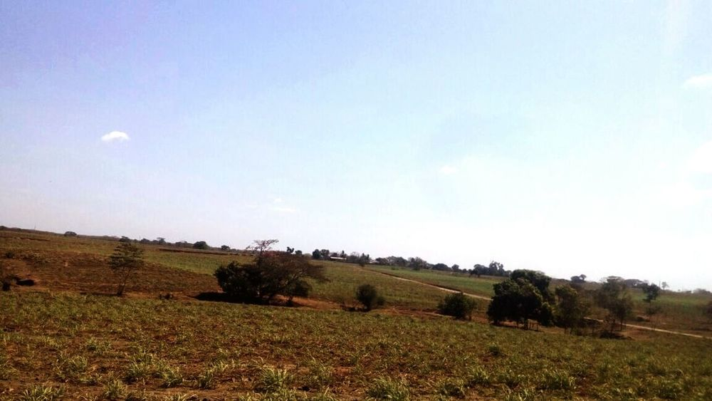 Bale  Agriculture Field Rural Scene Farm Landscape Hay First Eyeem Photo
