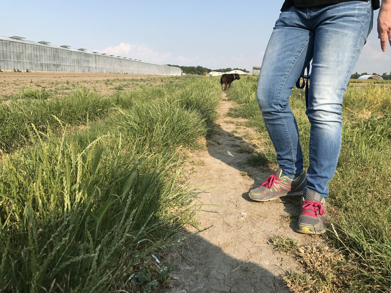 low section, real people, grass, day, one person, outdoors, field, nature, standing, human leg, lifestyles, leisure activity, women, growth, men, beauty in nature, sky, people
