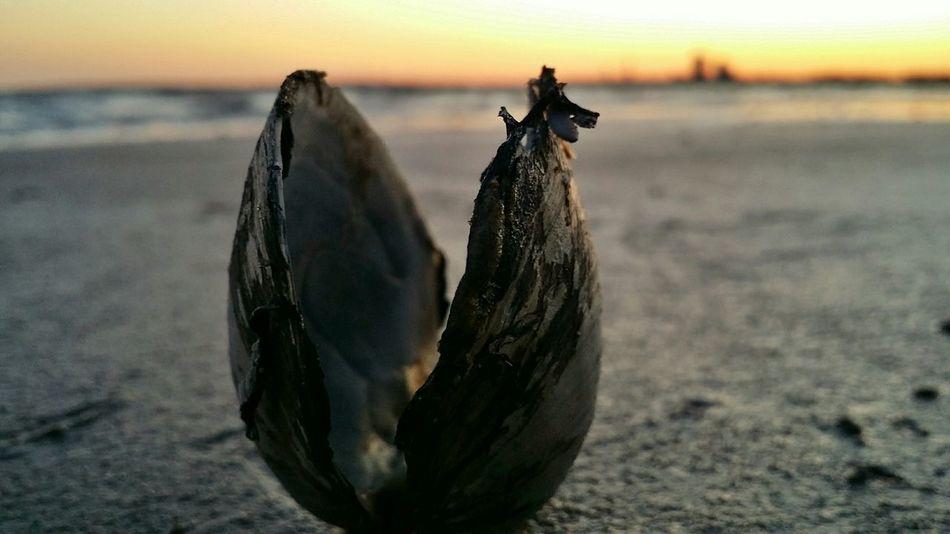 Sea Shell and Sunset. EyeEm Nature Lover EyeEm Best Shots Beach Life Waterscape Shells Sweden