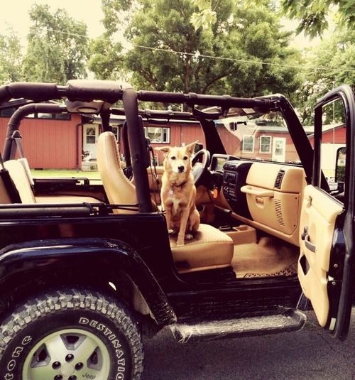 Live For The Story Dog Pets Transportation Outdoors Summer Wannagoforaride Jeep