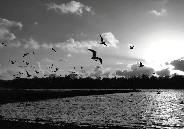 Birds No. 2,