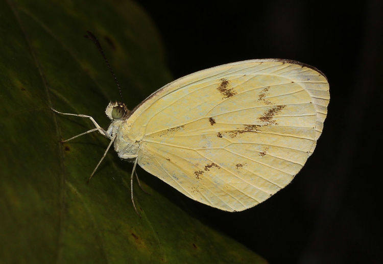 Close-up of butterfly on plant at night