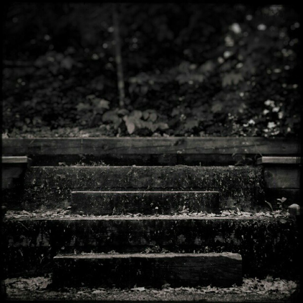 steps, no people, day, outdoors, tree, nature, close-up