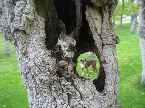 Pogo Perro Can árbol Atravesdeunagujero Dog Dogs Of EyeEm Animals In The Wild EyeEm Gallery GetbetterwithAlex EyeEm Best Shots Hiding Place Dogs Of Eyem Eyem Collection Tree
