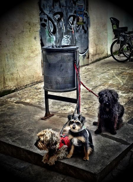A Dogs Life Dogs Parking Lot Threedogs Streetphotography Ciutat Vella Up Close Street Photography