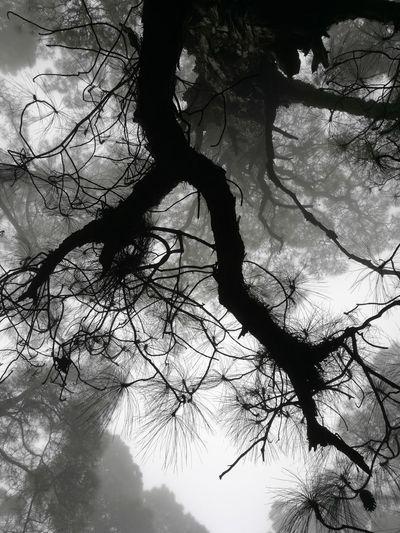 Las Raíces Tenerife Tree Nature Sky