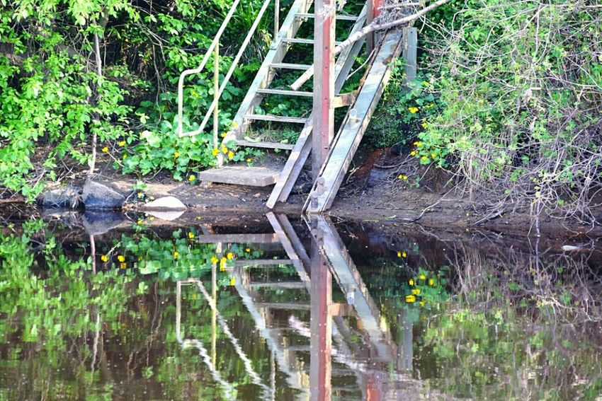 Old steps EyeEm Best Shots Justgoshoot Just Taking Pictures Bellingham Northumberland Country Life Rivertyne Wildlife & Nature Riverbank River View Reflections In The Water