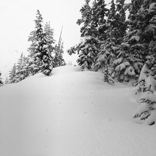 Winter Powderdays