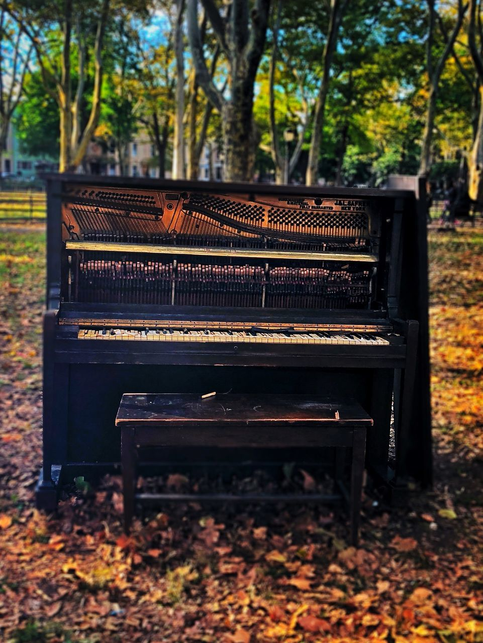 autumn, tree, bench, plant part, leaf, park, day, seat, wood - material, nature, piano, park - man made space, change, park bench, land, no people, plant, music, empty, musical equipment, outdoors, keyboard instrument