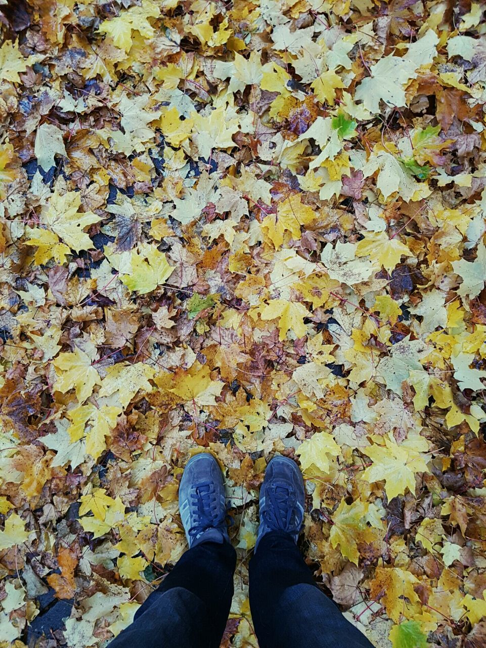 leaf, change, autumn, leaves, dry, shoe, fallen, low section, maple leaf, standing, personal perspective, nature, real people, human leg, outdoors, day, weather, high angle view, maple, one person, beauty in nature, abundance, directly above, yellow, close-up, lifestyles, people
